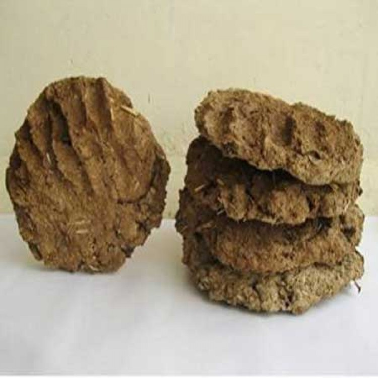 Cow Dung 5 Pic